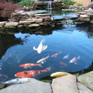pond-1-300x300